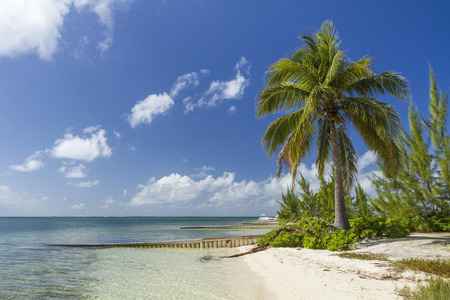 A palm tree stands guard over beautiful Starfish Point Beach on the North side of Grand Cayman, Cayman Island, British West Indies