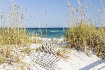 Dune fence and sea oats on the dunes at Pensacola Beach, Florida on Gulf Islands National Seashore.