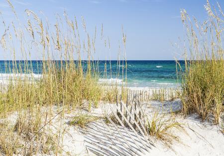 pensacola: Dune fence and sea oats on the dunes at Pensacola Beach, Florida on Gulf Islands National Seashore.