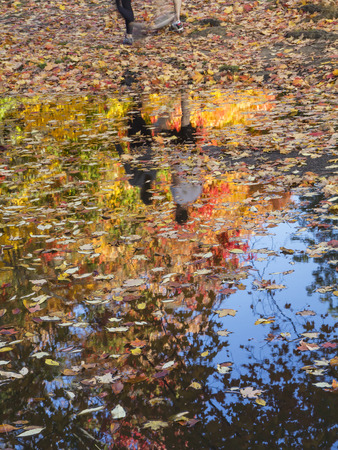 prospect: Deux coureurs pris en compte dans une flaque d'eau o� les feuilles d'automne flottent sur le Prospect Park surfacein, Brooklyn. Banque d'images
