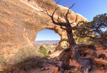 An Ent-like anthropomorphic Juniper Tree guards Partition Arch in the Devil