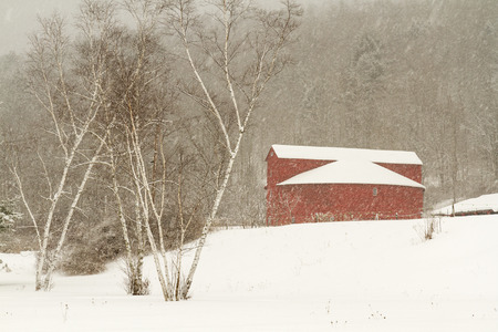 birch trees: Birch trees and the Pakatakan Round Barn on a snowy winter Stock Photo