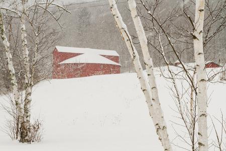 バーチの木と雪に覆われた冬の Pakatakan ラウンド納屋