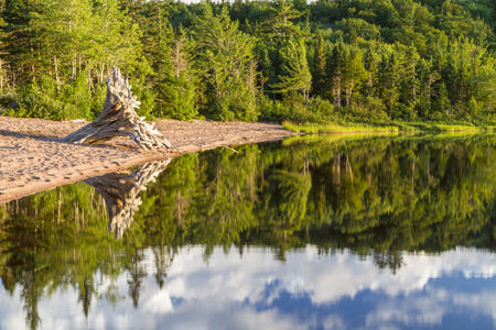warren: A forest reflected with a large driftwood tree on the beach during golden hour at Warren Lake in Cape Breton Highlands National Park, Nova Scotia