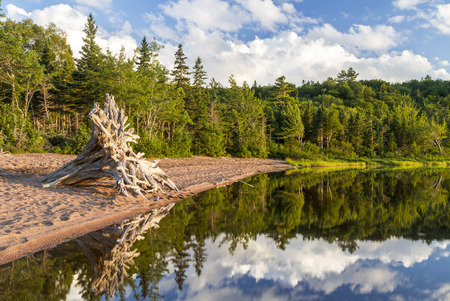 warren: A large driftwood tree on the beach and the forest and sky reflected in Warren Lake in Cape Breton Highlands National Park, Nova Scotia