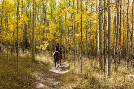 quaking aspen: A horseback rider winds through a colorful Aspen grove in Autumn color in the Kenosha Pass.