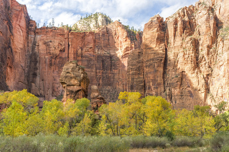 cottonwood canyon: An Autumn afternoon in the Zion Canyon amphitheatre known as the Temple of Sinawava, in Zion National Park, Utah.