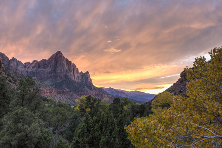 a watchman: Sunset on the Watchman mountain with a yellow Autumn Cottonwood tree in the foreground in Zion National Park, Utah