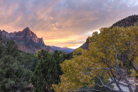 a watchman: Sunset on the Watchman mountain with a yellow Autumn Cottonwood tree and the Virgin River in the foreground in Zion National Park, Utah Stock Photo