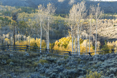 ridgeline: Aspens trees along a wooden fence lit by the last light of the day on the Cataract Loop Trail in the Arapaho National Forest in the Rocky Mountains of Colorado.