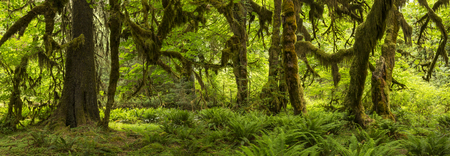 mosses: Hall of Mosses Panorama