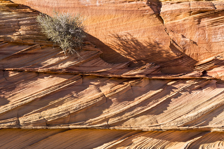 rock strata: A shrub clings to layers of colliding rock strata in the South Coyote Buttes region of the Vermillion Cliffs National Monument in Arizona.