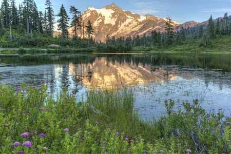 mt baker: Mt. Shuksan reflected in Picture Lake surrounded by wildflowers from the Mt. baker Ski Area