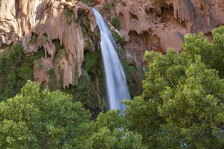 cottonwood canyon: Havasu Falls plunges behind a canopy of Cottonwood Trees on the Havasupai Indian Reservation in the Grand Canyon.