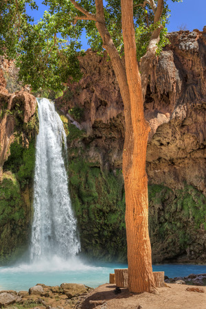 indian creek: A tall tree provides shade on a sunny day at Havasu Falls on the Havasupai Indian Reservation in the Grand Canyon.
