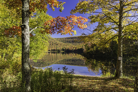 maple trees: Two sugar maple trees on the shore of peaceful Big Pond reflecting Autumn foliage in the Catskills Mountains of New York.