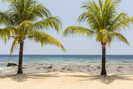 A pair of coconut palm trees on the beautiful sandy beach and coral reef at Lighthouse Point near the Meridian Resort in Roatan, Honduras.