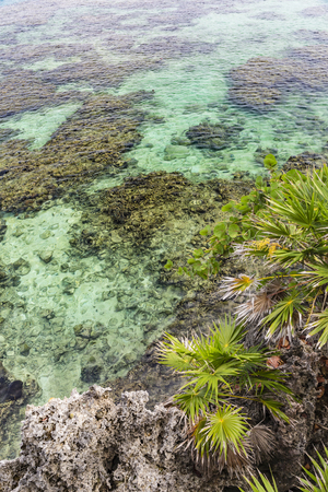 Palm trees on a cliff above the crystal clear waters of the Roatan barrier Reef Iron Shore in West Bay, Roatan, Honduras