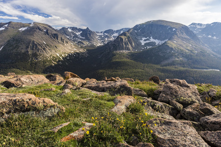 Wildflowers at Forest Canyon Overlook on Trail Ridge Road in Rocky Mountain National Park, Colorado Stock Photo