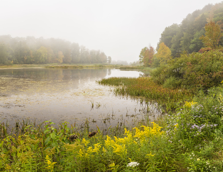 Goldenrod and other wildflowers on a foggy Autumn morning on Wawaka Lake in Halcottsville, NY. Stock Photo