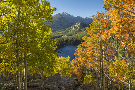 Early aspen color above Bear Lake with Longs Peak in the background in in Rocky Mountain National Park, Estes Park, Colorado.