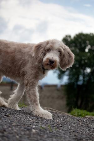 cute furry dog photo