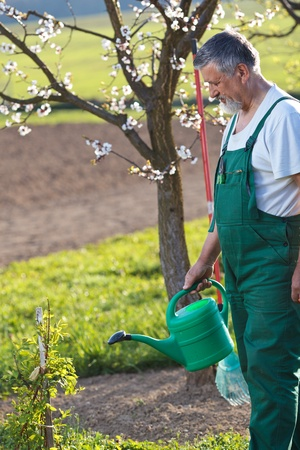 watering orchard/garden - portrait of a senior man gardening in his garden (color toned image) Stock Photo - 9799754