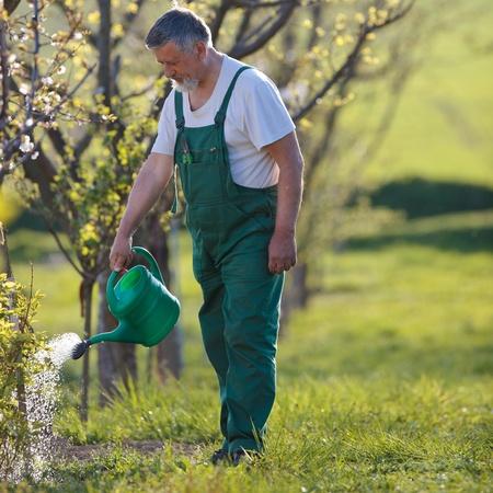 jardineros: riego Huertajard�n - retrato de un hombre alto, jardiner�a en su jard�n (imagen en tonos de color) Foto de archivo