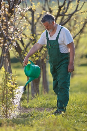 watering orchard/garden - portrait of a senior man gardening in his garden (color toned image) Stock Photo - 9792041