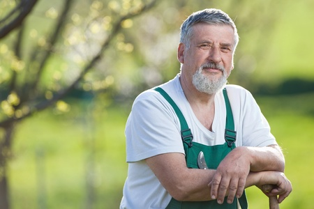9808008: portrait of a senior man gardening in his garden (color toned image)