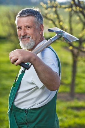 portrait of a senior man gardening in his garden (color toned image) Stock Photo - 9795344