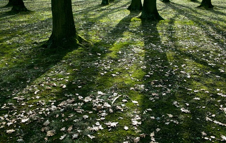 Low early spring setting sun in a forest casting long shadows photo