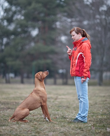 outdoor training: Master and her obedient (rhodesian ridgeback) dog
