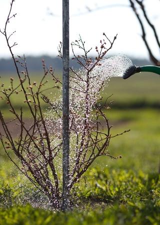 mattock: Garden watering Stock Photo