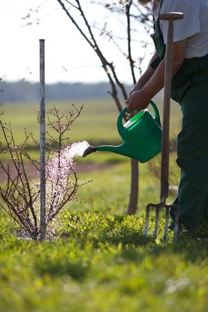 dibble: Garden watering Stock Photo
