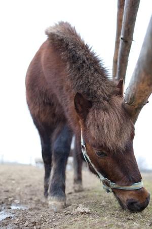 cute little pony photo
