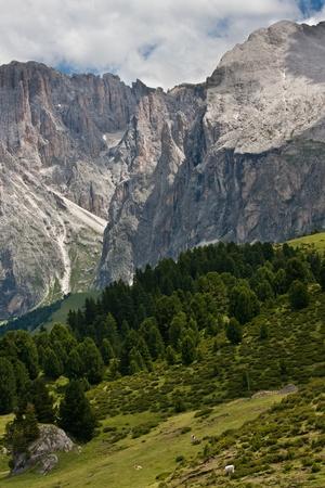 lovely summer alpine scenery photo