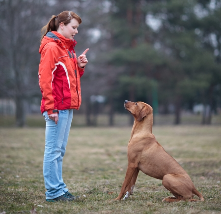 Master and her obedient (rhodesian ridgeback) dog photo
