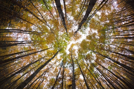 autumn forest treetops (intentionally distorted image; shot with a fisheye lens) photo