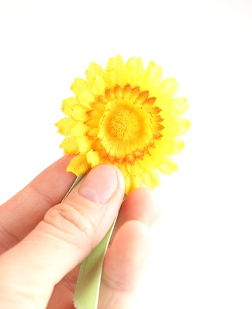 action fund: yellow flower breast-pinbrooch - symbol of the fight against cancer - isolated on white background