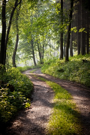 lovely forest path in early morning sunshine (shallow DOF; color toned image) photo