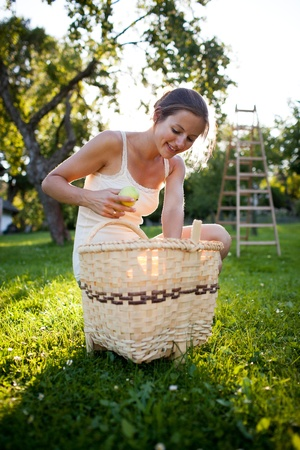 recoger: Mujer joven recoger las manzanas en un huerto en un día soleado de verano hermosa Foto de archivo