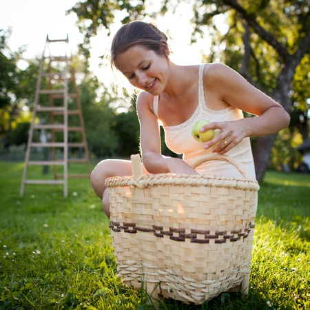 Young woman collecting apples in an orchard on a lovely sunny summer day Stock Photo - 10523682