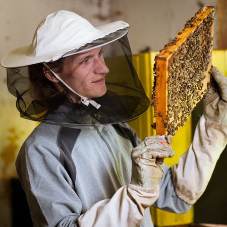 Beekeeper in an apiary holding a frame of honeycomb covered with swarming bees photo