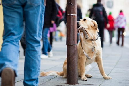 Dog leashed up on a street photo