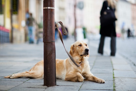 errand: cute dog waiting patiently for his master on a city street Stock Photo