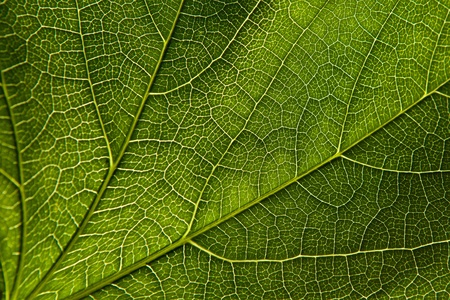 leaf close up: Green leaf close-up Stock Photo