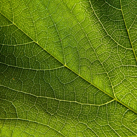 climate change: Green leaf close-up Stock Photo