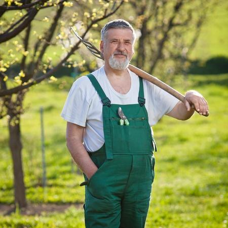 hoe: portrait of a senior man gardening in his garden (color toned image)
