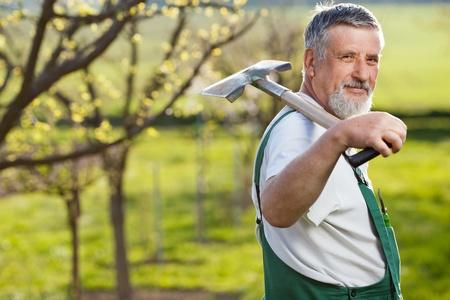 rake: portrait of a senior man gardening in his garden (color toned image)